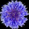 Korenbloemtoernooi logo